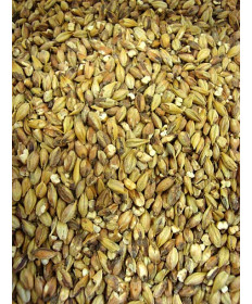 Special Roast Malt- Briess