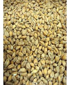 Wheat Malt- Briess