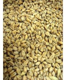Wheat Malt- Durst