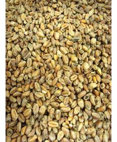 Wheat Malt- (Pale)- Dingemans