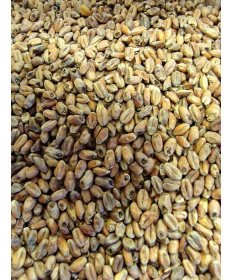 Roasted Wheat Malt- Dingemans