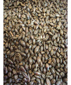 Black Barley Malt- Briess