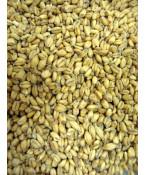 Soft White Wheat Malt- Briess