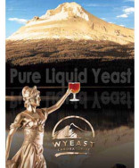 Flanders Golden Ale: Wyeast 3739 (Private Collection)