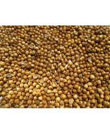 Coriander Seed- 2 oz