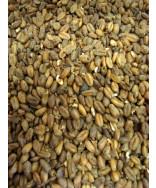 Carawheat Malt- Weyermann