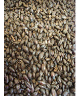 Black Barley Malt- Briess