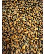 Roasted Barley- Briess