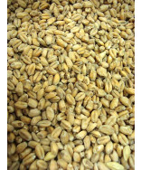 Wheat (Pale) Malt- Weyermann