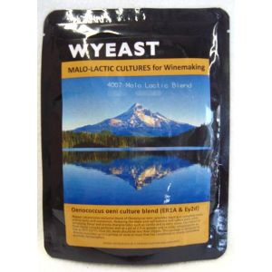 Malo Lactic Culture: Wyeast 4007